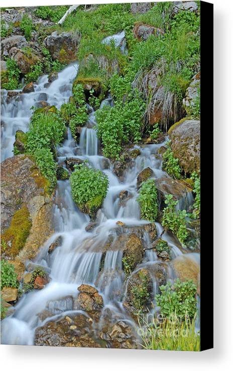 Logan Canyon Canvas Print featuring the photograph Logan Canyon Cascade by Dennis Hammer