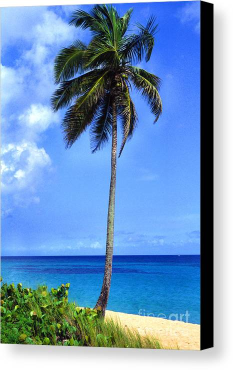 Puerto Rico Canvas Print featuring the photograph Lonely Palm Tree Los Tubos Beach by Thomas R Fletcher