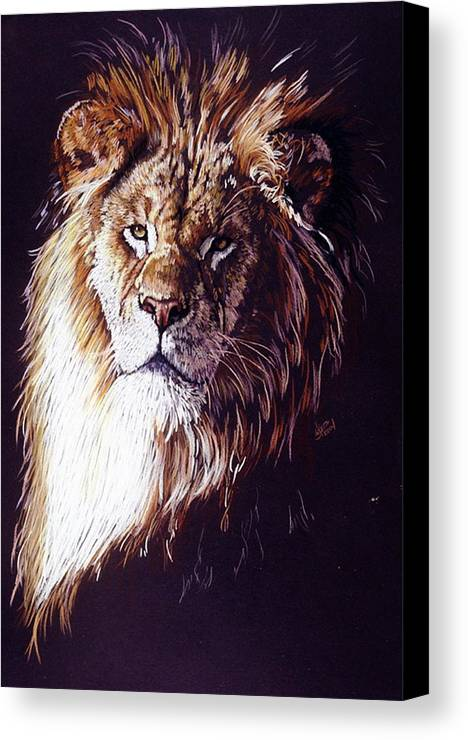 Lion Canvas Print featuring the drawing Maestro by Barbara Keith