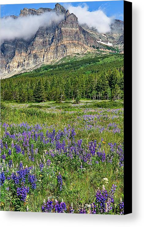 Vertical Canvas Print featuring the photograph Meadow With Lupines by Merilee Phillips