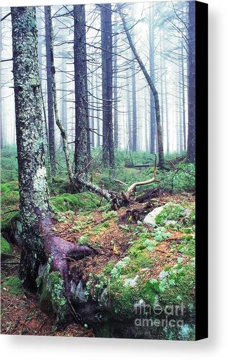 Usa Canvas Print featuring the photograph Misty Forest Gaudineer Scenic Area by Thomas R Fletcher