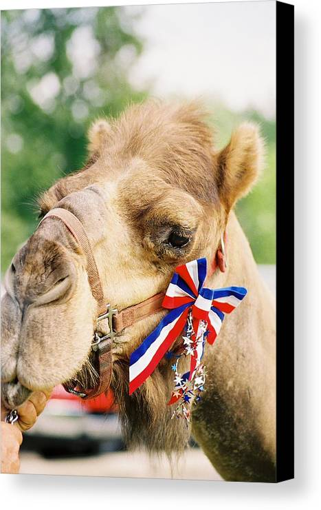 Camel Canvas Print featuring the photograph Mr. Camel by Cheryl Martin