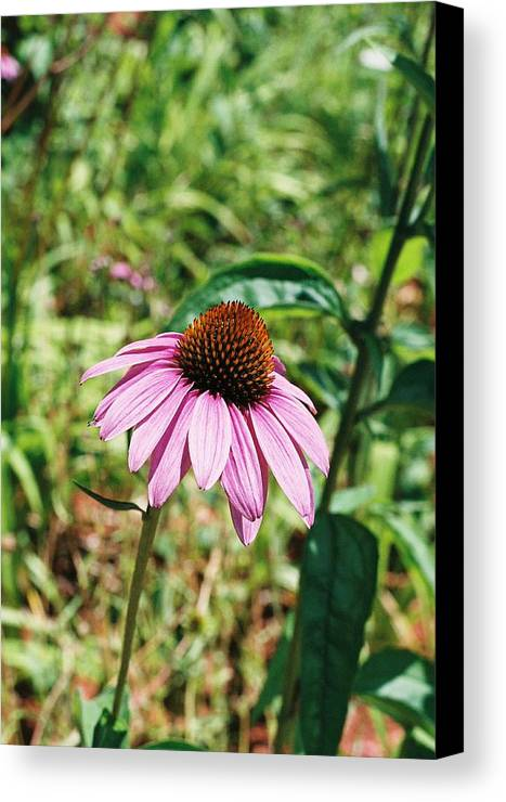 Flower Canvas Print featuring the photograph Purple Coneflower by Cheryl Martin