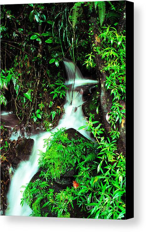 Puerto Rico Canvas Print featuring the photograph Rushing Stream El Yunque National Forest by Thomas R Fletcher