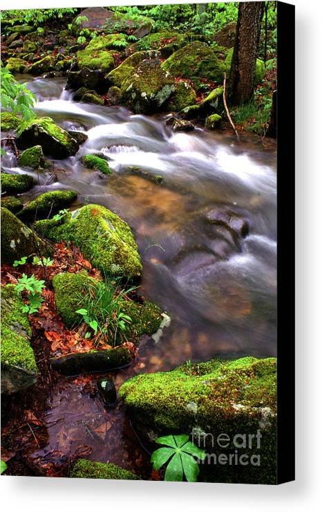 Rushing Stream Canvas Print featuring the photograph Rushing Stream Monongahela National Forest by Thomas R Fletcher