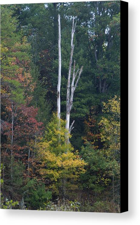 Trees Canvas Print featuring the photograph Tree Of Life by Bj Hodges