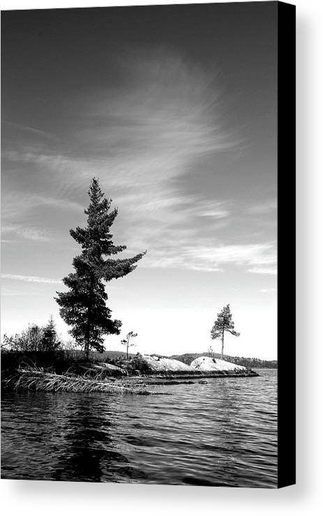 Photography Canvas Print featuring the photograph Two Pines by David Hickey