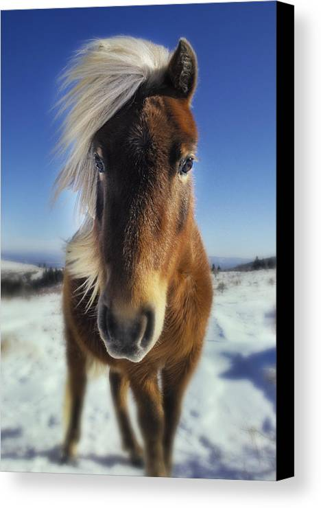 Horse Canvas Print featuring the photograph Wild Thing by Frederica Georgia