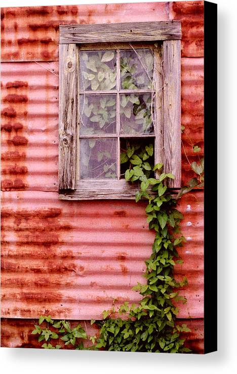 Window Canvas Print featuring the photograph Window Of Ivy by Andrew Giovinazzo