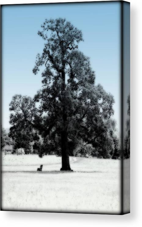 Tree Canvas Print featuring the photograph Along The Path by Kathy Sampson