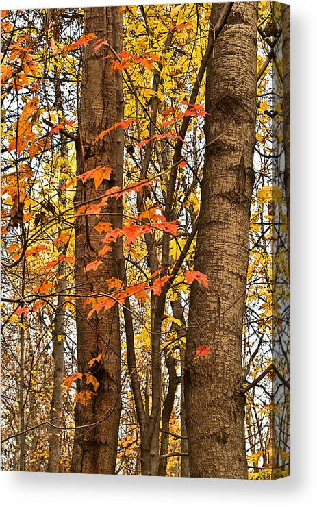 Landscapes Canvas Print featuring the photograph Color And Trees Lan 225 by G L Sarti