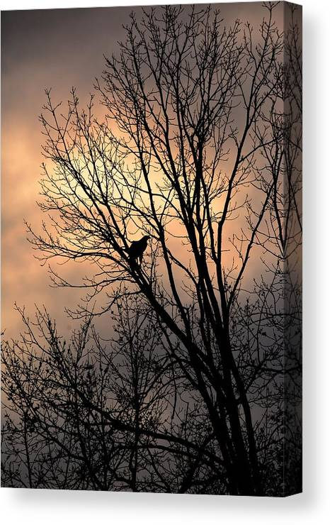 Bird Canvas Print featuring the photograph End Of The Day Red Tailed Hawk by Charles Owens