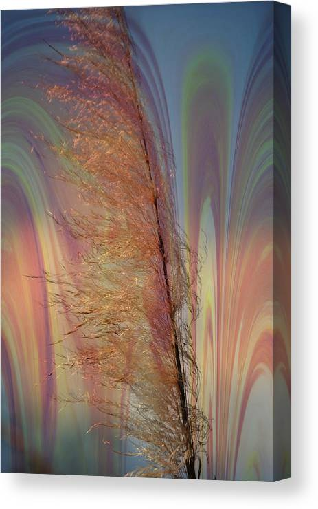 Plants Canvas Print featuring the photograph Pampas With A Glow by Michele Kaiser
