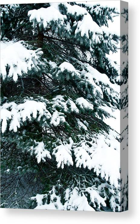 Snow Canvas Print featuring the photograph Snowy Pine by Nickaleen Neff