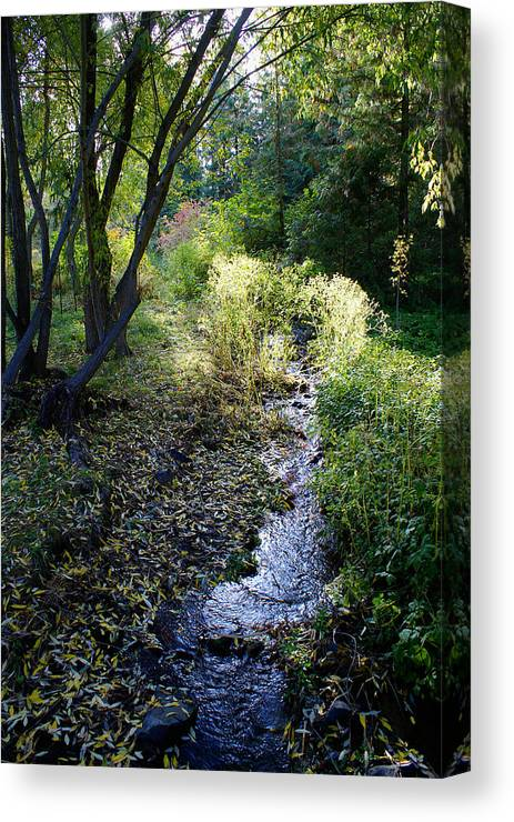 Nature Canvas Print featuring the photograph The Creek At Finch Arboretum 2 by Ben Upham III