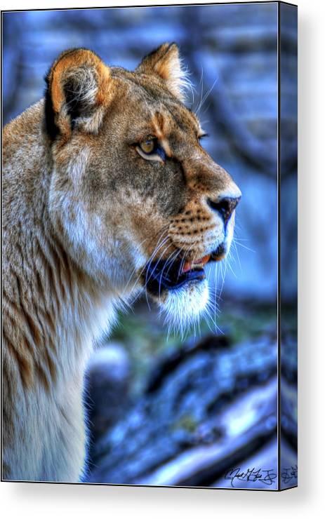 Lion Canvas Print featuring the photograph The Lioness Alert by Michael Frank Jr