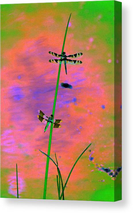 Dragonflies Canvas Print featuring the photograph The Skimmer And The Whitetail Art #1 by Ben Upham III