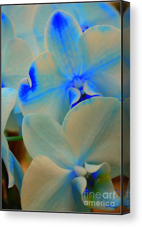 Orchid Canvas Print featuring the photograph White And Blue Orchid by Dora Sofia Caputo Photographic Design and Fine Art