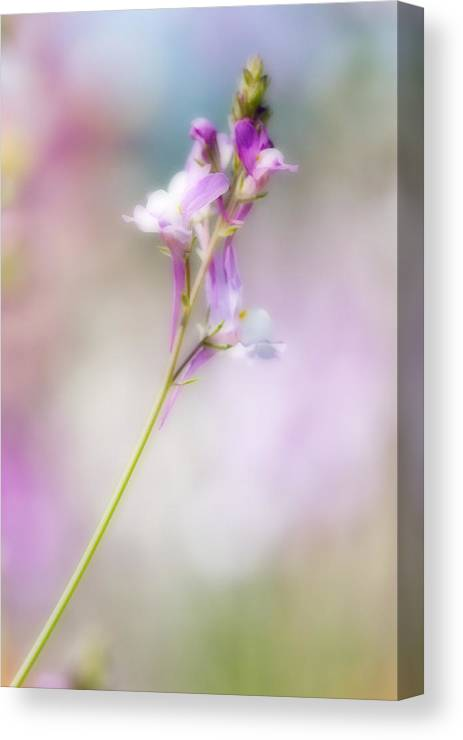 Wildflower Canvas Print featuring the photograph Wildflower Beauty by Bill LITTELL