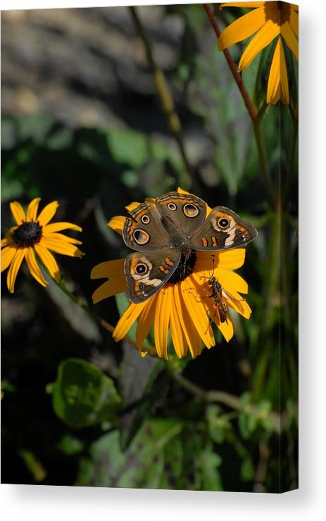 Butterfly Canvas Print featuring the photograph Butterfly 90 by Joyce StJames