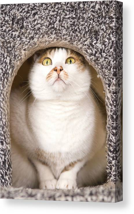 Vertical Canvas Print featuring the photograph Cat From Cats House by Lawren