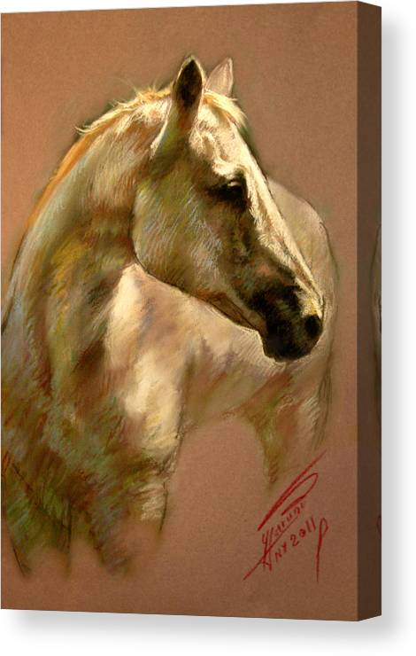 White Horse Canvas Print featuring the pastel White Horse by Ylli Haruni