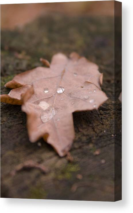 Leafs Canvas Print featuring the photograph Dead Leaf by Mihail Antonio Andrei
