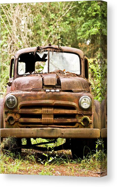 Color Photography Canvas Print featuring the photograph On Guard by Wayne Denmark