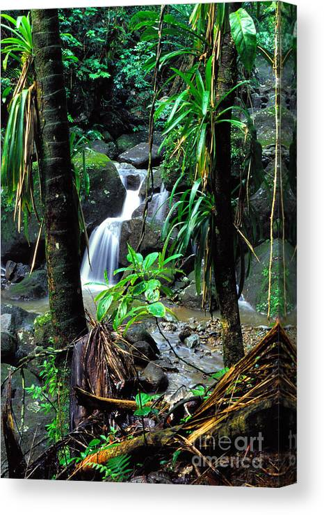 Puerto Rico Canvas Print featuring the photograph Waterfall El Yunque National Forest by Thomas R Fletcher