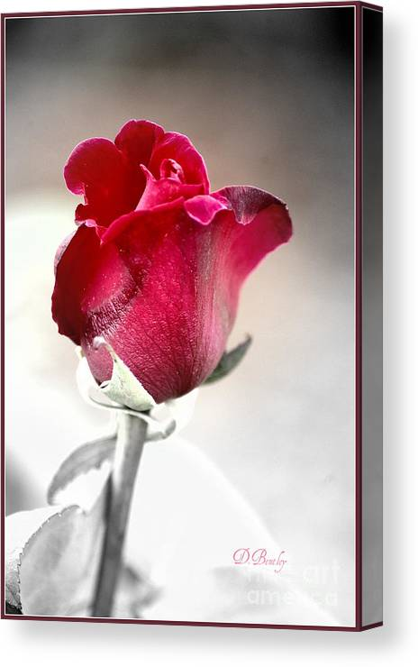 Rose Canvas Print featuring the photograph The Rose by Donna Bentley