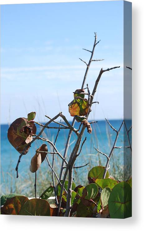 Ocean Canvas Print featuring the photograph Dune Plants by Rob Hans