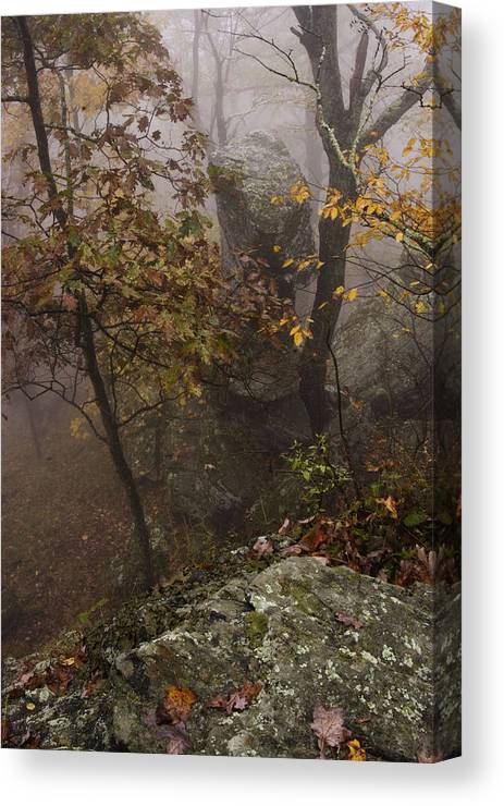 Trees In Fall Colors In The Fog Canvas Print featuring the photograph Fog On The Mountain by Gregory Colvin