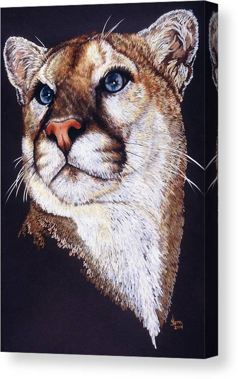 Cougar Canvas Print featuring the drawing Intense by Barbara Keith