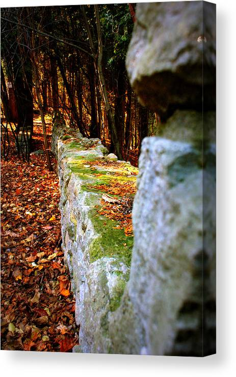 Moss Canvas Print featuring the photograph Mossy Wall by Amanda Stross