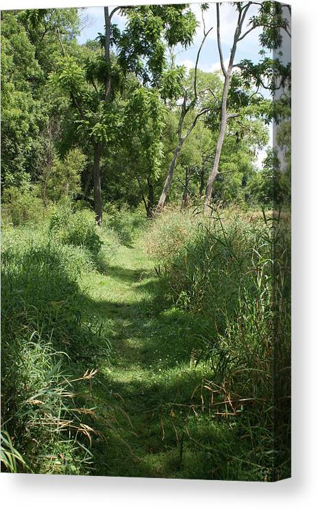 Nature Canvas Print featuring the photograph Nature Trail by Heather Green