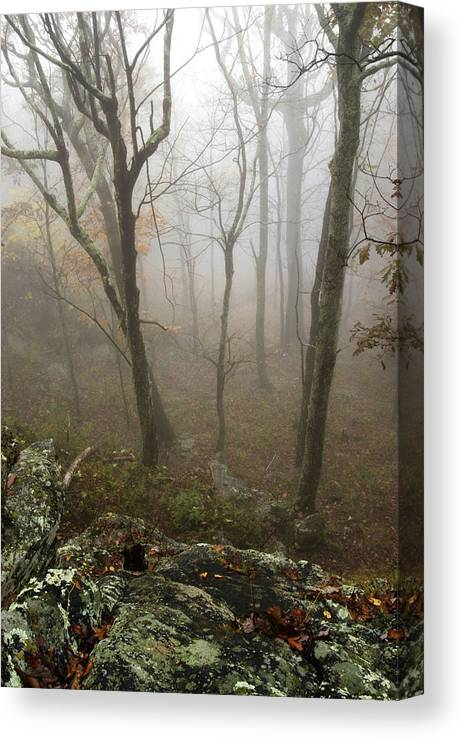Tress In Fog Canvas Print featuring the photograph North Carolina Foggy Mountain by Gregory Colvin