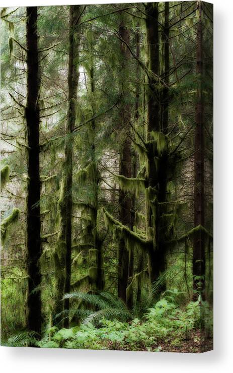 Oregon Canvas Print featuring the photograph Oregon Old Growth Coastal Forest by Renee Hong