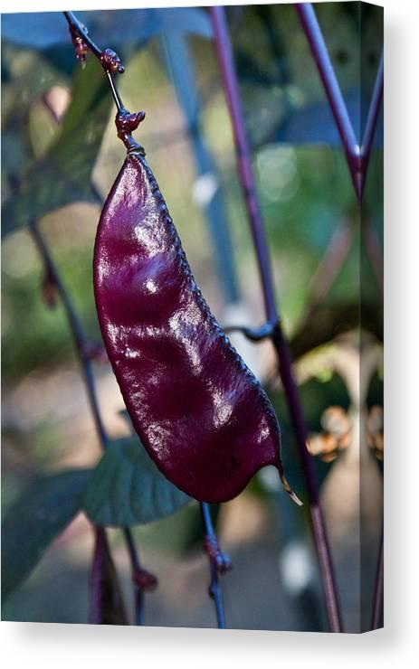 Purple Pea Pod