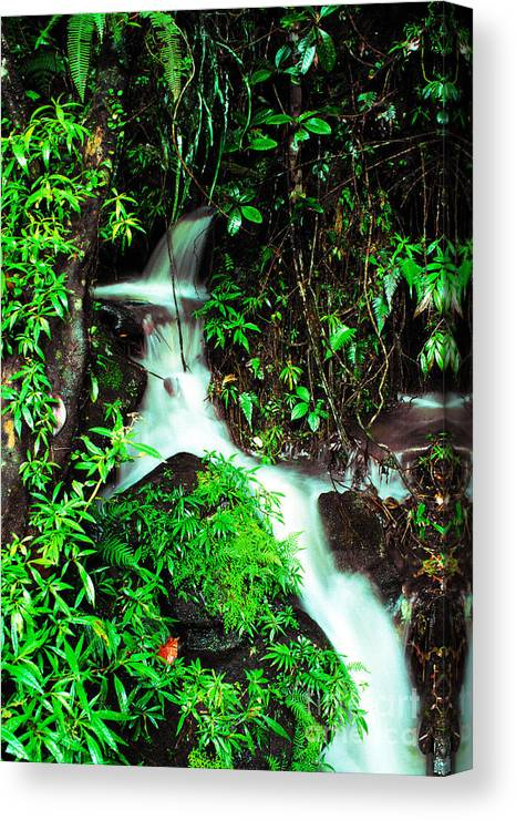 Puerto Rico Canvas Print featuring the photograph Rushing Stream El Yunque National Forest Mirror Image by Thomas R Fletcher