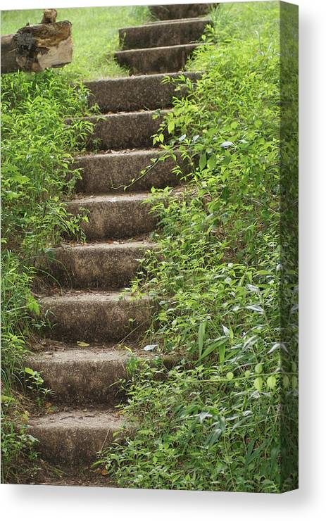 Nature Canvas Print featuring the photograph Stairway To Heaven by Heather Green