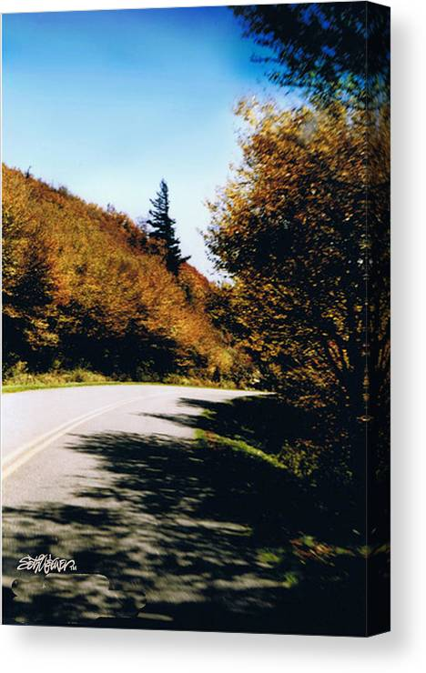 High In The Great Smoky Mtn. As You Round A Curve Stands This Noble Spruce. Canvas Print featuring the photograph Single Spruce by Seth Weaver