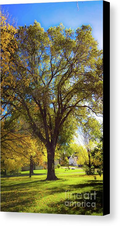 Tree Canvas Print featuring the photograph Adorning Elm Autumn Park by Isaiah Moore