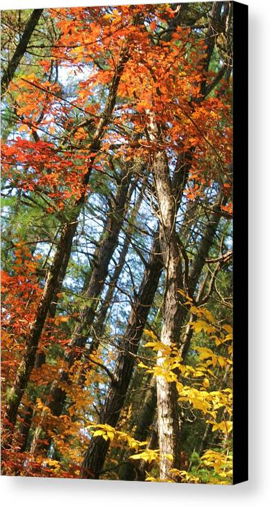 Fall Foliage Canvas Print featuring the photograph All That Color by Joe Martin