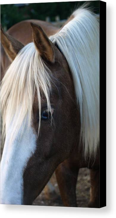Palomino Canvas Print featuring the painting Blue Eye by Kim