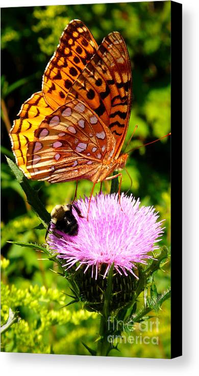 Meadow Fritillary Canvas Print featuring the photograph Meadow Fritillary On Thistle Blossom by Thomas R Fletcher