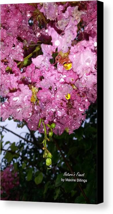Raindrops Canvas Print featuring the photograph Pink Crystals by Maxine Billings