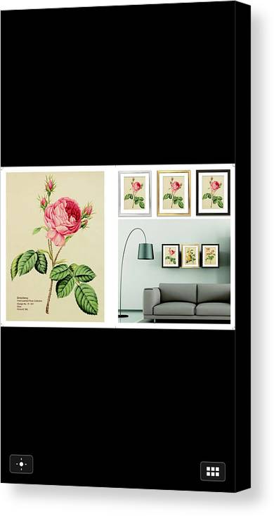 Rose On The Silk Cloth Canvas Print featuring the painting Summer Rose by Dongyan