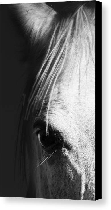 Horse Canvas Print featuring the photograph Theeye by Mel Stone