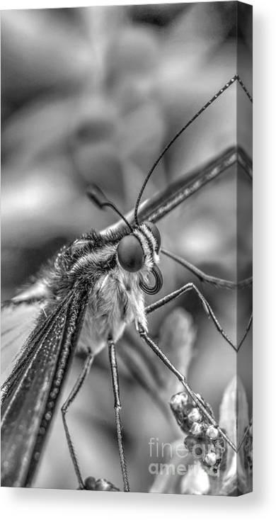 Lepidoptera Canvas Print featuring the photograph Butterfly by MSVRVisual Rawshutterbug