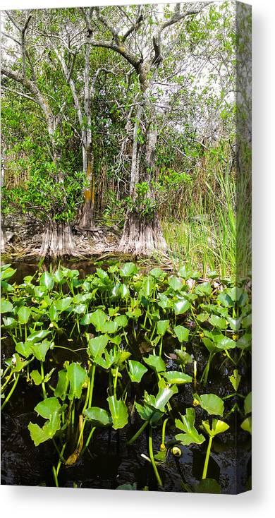 Florida Everglades Canvas Print featuring the photograph Florida Everglades by Zech Browning